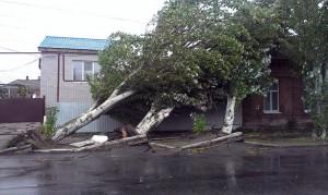 «Деревопад у Бердянську – трагедія глобального рівня?» –